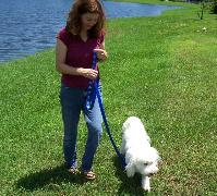 loose leash training