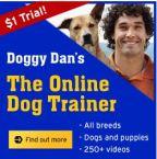 Doggy Dan, Online Dog Trainer - Dog barking solutions