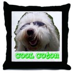 coton de tulear pillow