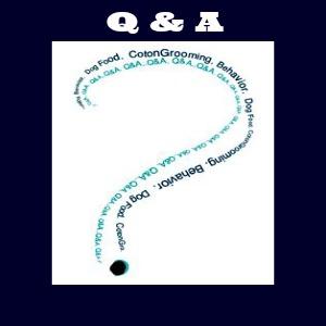coton de tulear questions