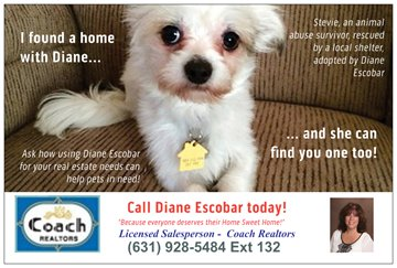 Stevie, animal abuse survivor, helps spread the word about how your Real Estate needs can help pets in need!