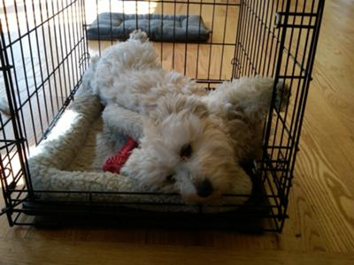 sleeping in his crate