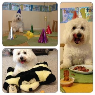 Baxter's 1st Birthday Party
