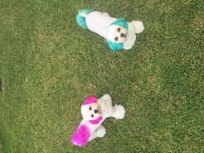 Bijoux= pink & Cooper=teal