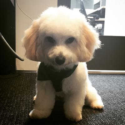 Buddy's Post Cut Sulk-a-thon
