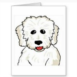 coton de tulear notecards