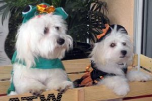 Cotons in Halloween costume