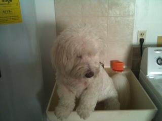 Luc getting a bath