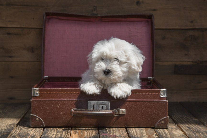 Best Dog Travel Tips,puppy,luggage,suitcase