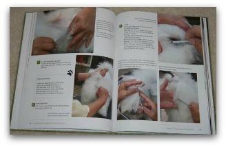 coton de tulear grooming book