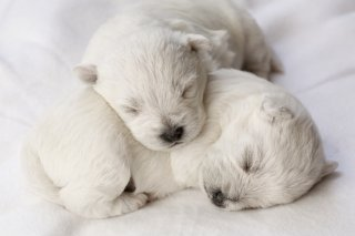 adorable sleeping puppies