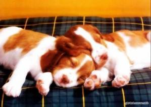 cute sleeping pups