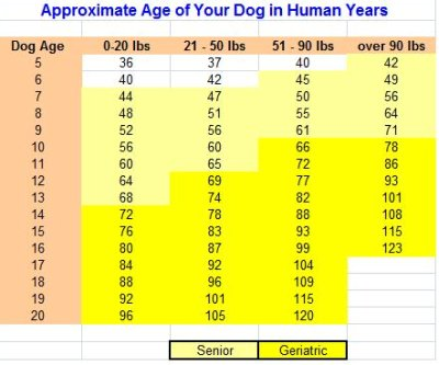 What Is A Cat Year Compared To A Human Year