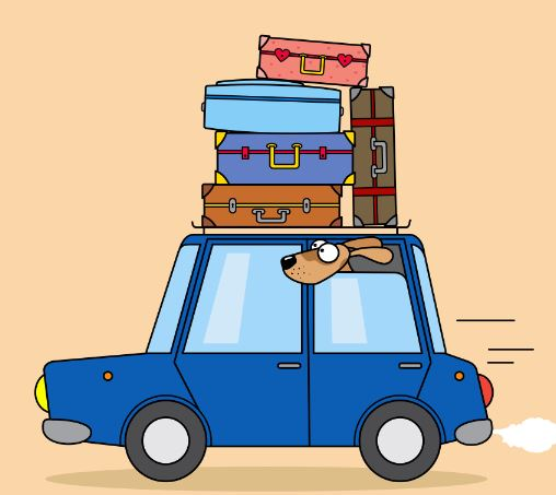 dog car travel