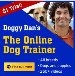 Doggy Dan, Online Dog Trainer - Dog barking solutions