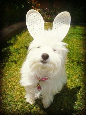 Cali-Kat saysHOPPY Easter EveryBUNNY