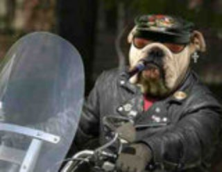 dog in funny motorcycle costume