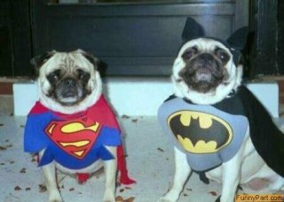 super hero dog costumes