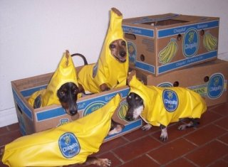 dog in banana costume