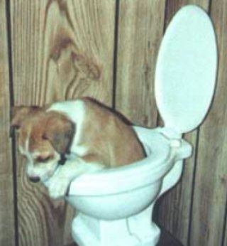 dog toilet training?