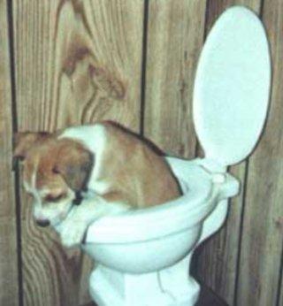 dog toilet training?
