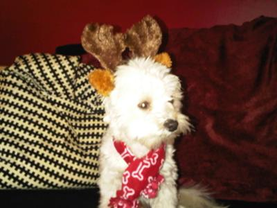 Spanky the Reindeer!