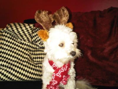 Spanky the Reindeer!