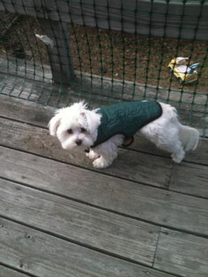 Grandma got Spanky a new coat for his Birthday!