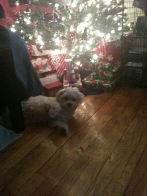 His fav place to rest is in front of the tree.