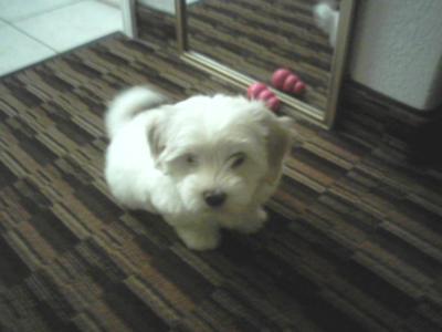 Pixie is 8 weeks here