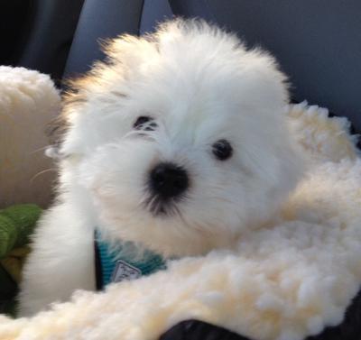 Huckleberry enjoying his car seat!