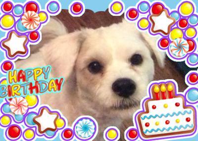 Happy 1st Birthday Pino!