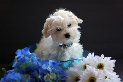 Leroy - cutest dog e-v-e-r ; )