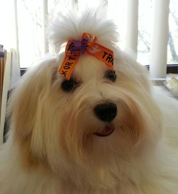 Sporting her Halloween bow!