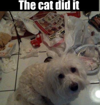 guilty coton do