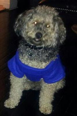 Mnaju wearing his snuggie after playing in the snow