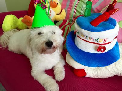 Maxwell celebrating his third birthday.