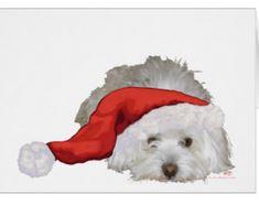 Coton de Tulear Christmas