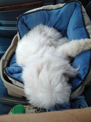 Traveling is soooo - nap...