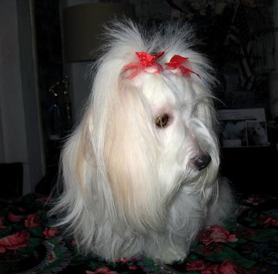 Most-beautiful-long-haired-dog in the World!