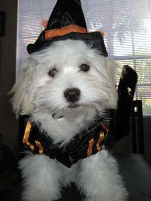 Casey ready for Halloween