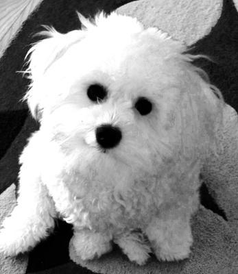 My Beautiful Rudy