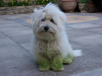 Amie in her green wellies