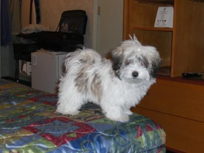 Tuffy at four months