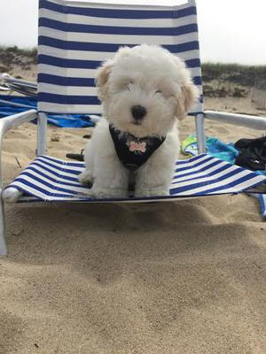 Teddy at the beach