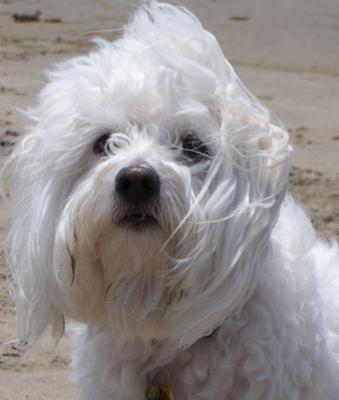 Gracie at the beach