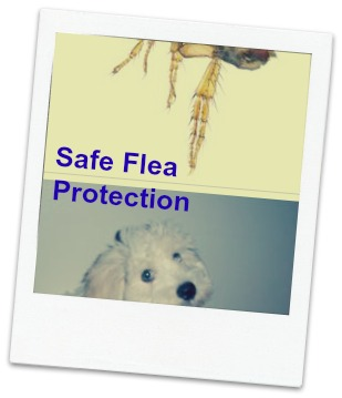 natural flea remedies for dogs