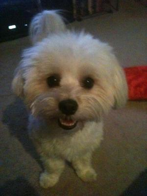 Spanky's dog of the month smile