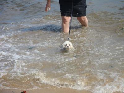 Spanky swimming