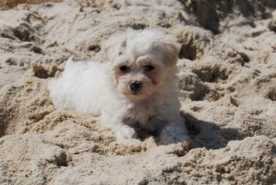 Leela, playing in the sand